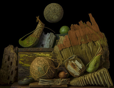 Still Life with Pitcher Plants and Driftwood