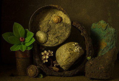 Still Life with Sand, Snail & Stone