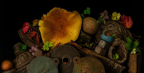 Still Life with Mushroom and Fallen Nests