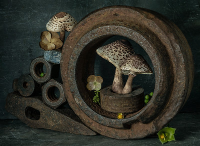 Tunnel of Love (Still Life with Mushrooms #1)