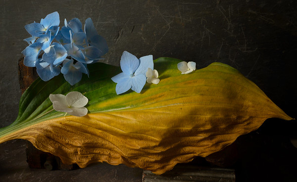 Still Life with Rhododendron