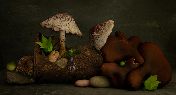 Still Life with Mushrooms #3