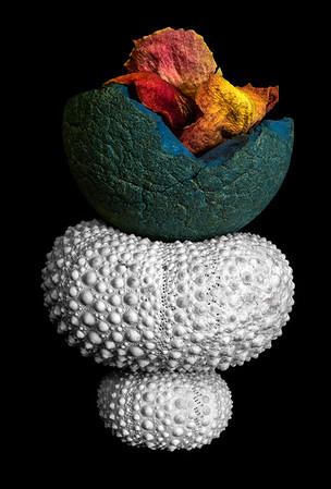 Urchin, Ball and Rose Petals - 27x18 • -$750 (unframed) • 2/13