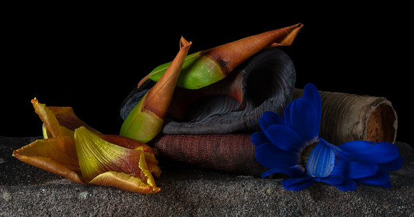 Still Life with Anemone, Magnolia & Tulip Leaves - 18x35  • 1/13