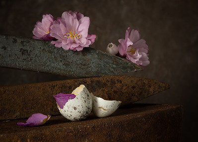 Still life wirh Railroad Spikes, Cherry  Blossom & Sparrow Egg