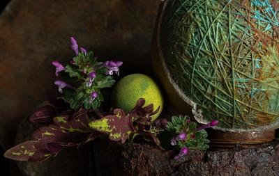 Still Life with Purple Dead Nettle