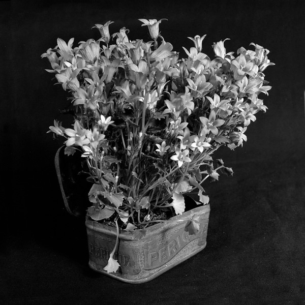 Still life with tobacco tin and flowers