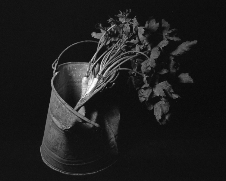 Parsnips with Bucket