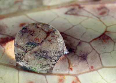 Magnifying drop on autumn leaf, made with magnification factor 3 and f/16.