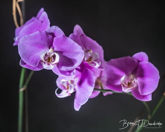 Orchid with atmosphere