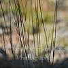 Grasses #2