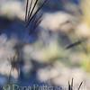 Feather Fingergrass, #4: shadow dance