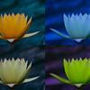 Lillies Warhola