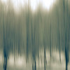 Blurry Trees in the forest