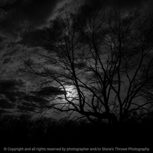 015-sunset_tree-ankeny-17apr16-09x09-006-bw-7747