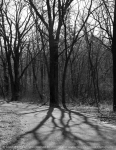 015-tree_shadows-wdsm-05mar09-cvr-bw-1384