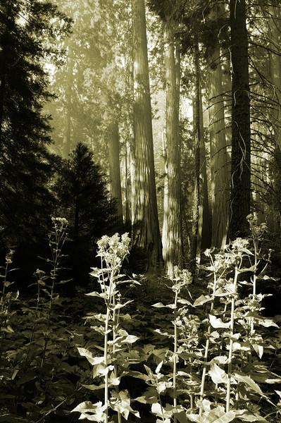 Smokey Forest Flowers