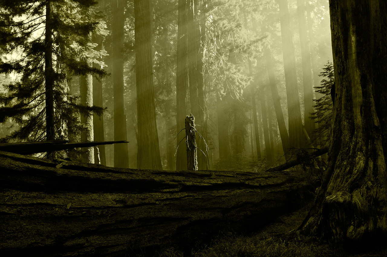 Sun Smiles on the Smokey Giant Forest