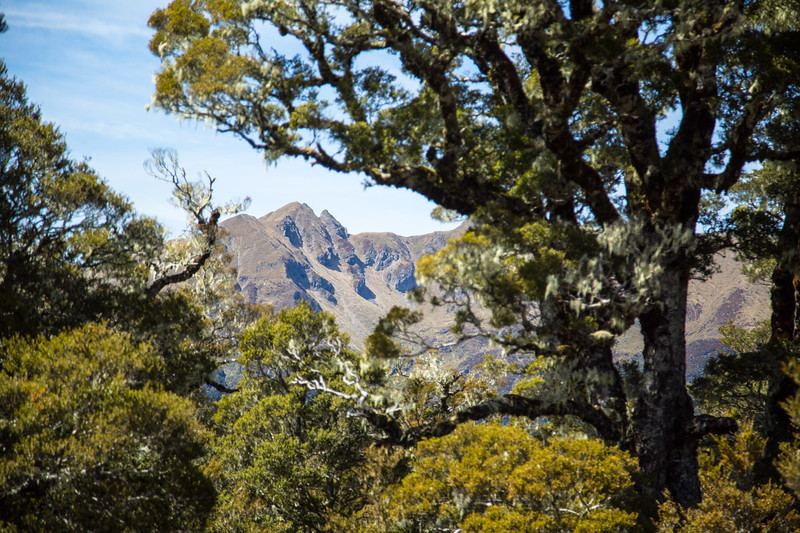 Arthur Range seen from Salisbury Hut in Kahurangi National Park, New Zealand
