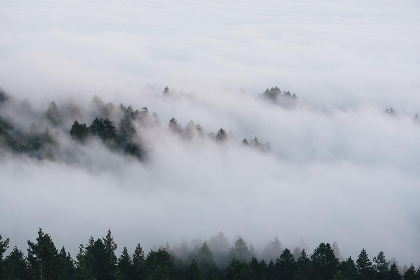 Tamalpais Fog