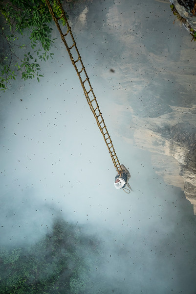 "Mauli Dhan, the last honey hunter, at the first of three harvest locations.  The team at the base lights smoke to smoke out the bees and Mauli makes his initial climb up the free hanging ladder.  After cllimbing up the ladder from below his must first tie himself off to a small vine tree to get him closer to the hive on this severly overhanding cliff. The frist step is to chat a mantra for the bees to leave peacefully and brush off the bees with a bamboo pole in gaint clumps.   He pokes cotter pin-like pegs through the six-foot-wide, half-moon shaped hives, then attaches the pegs to a bamboo rope managed by an assistant above. The final step is to sever the hive from the wall. Maule cries out 'Yuwa ke!' ""(it has fallen!)"" This call, echoed by the other honey hunters, rings out across the jungle, while the hive is carefully lowered to the ground.  Then he must  scrape the best honey off from the roof of the overhang.  His basket has ropes going to the top for his team to take the weight as he controls it and communicates.   Each time he communicates with his team above he must lean back to yell up.  Its an intese core wrenching position and the small rope he has hooked around his armpits for protection cuts his skin to near the bleeding point., myngmedit"