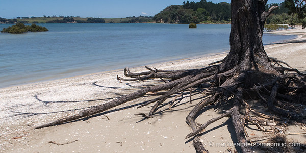 View of Long Bay Regional Park from Karepiro bay.