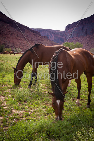 Horses at the Red Cliff Lodge where we stayed in Moab.