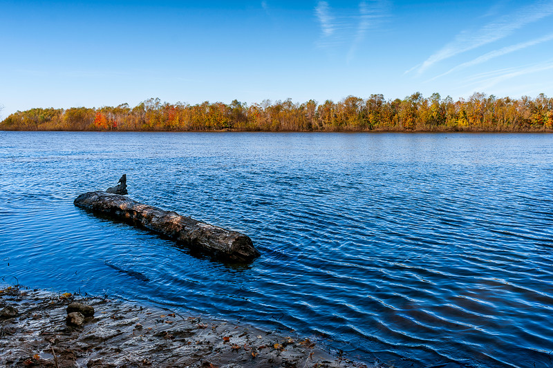 011-Delebar-State-Park-Illinois-Lake-Tree-Driftwood-Lee-Mandrell