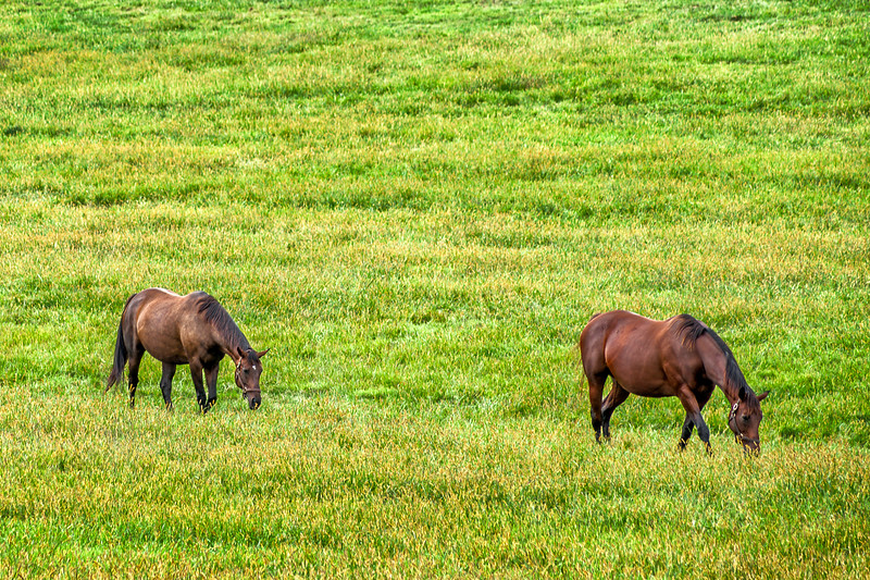 010-Horse-Park-Kentucky-Lexington-Horses-Lee-Mandrell