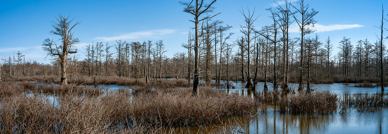 016-Cache-River-Wilderness-Area-Cypress-Trees-Swamp-Illinois-Panoramic-Lee-Mandrell