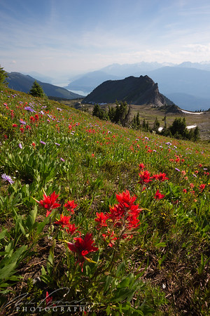 indian paintbrush scenic