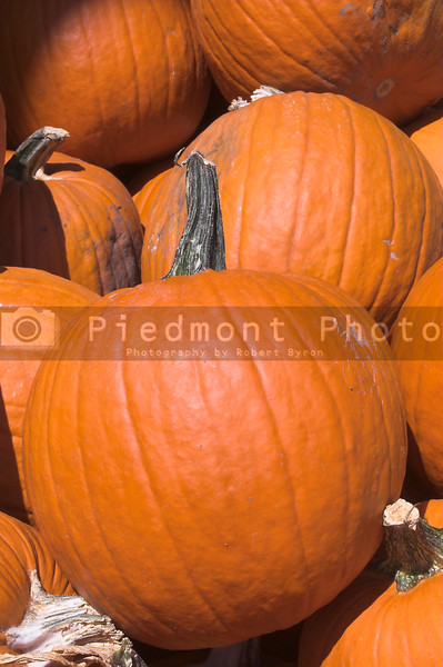 A large pile of plump and juicy holliday pumpkins.