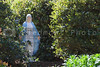 A statue of the Virgin mary in a garden.
