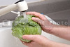 A person vigorously washing a cabbage head.