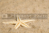 A starfish in the sand at the beach.