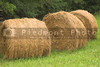 A field with bales of wheat hay.