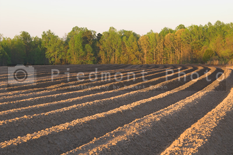 The furrows of a freshly plowed field.