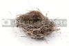 The empyt nest of a birs ready for occupancy.