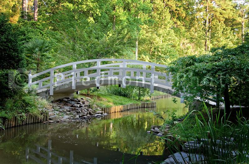 Arched Wooden Bridge