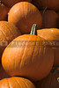 A large pile of plump and juicy pumpkins.
