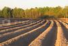 The furrows of a freshly plowed field.