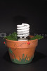A fluorescent light bulb growing in a pot.