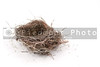 An empty nest of a bird ready for occupancy.