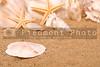 A sand dollar on the shore of the beach.