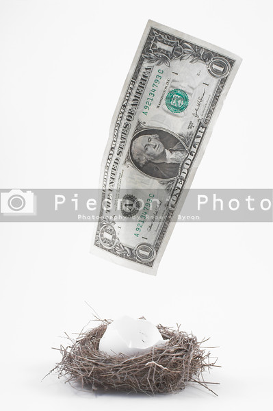 A dollar bill flying away from the nest.