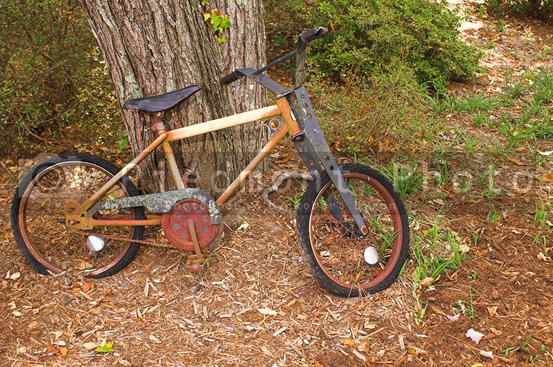 An old abandoned and forgotten bicycle rusting away.