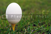 A farm fresh egg on a golf tee.