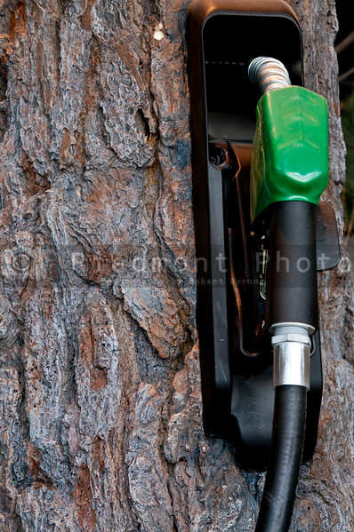 Natural gas pump in a pine tree