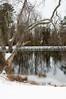 Snow Tree Pond