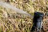 A lawn sprinkler as it waters a yard